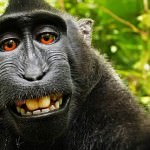 monkey-selfie-feature-150x150.jpg